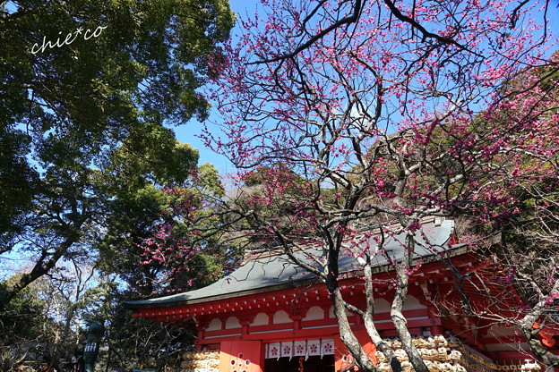 写真: 鎌倉-219