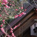 写真: 鎌倉-216