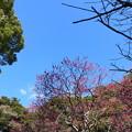 写真: 鎌倉-209