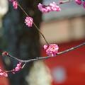 写真: 鎌倉-206
