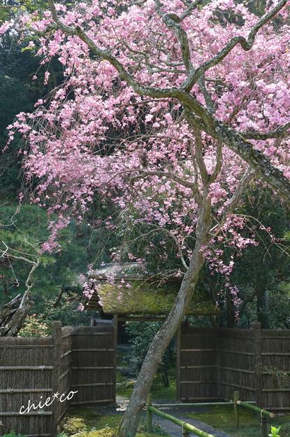写真: 鎌倉-459