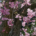写真: 鎌倉-453