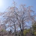 写真: 鎌倉-449