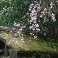 写真: 鎌倉-439