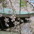 写真: 鎌倉-442