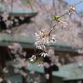 写真: 鎌倉-443