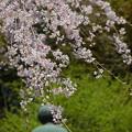 写真: 鎌倉-446