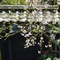 写真: 鎌倉-447