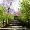 写真: 鎌倉-504