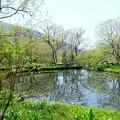 写真: 箱根-360