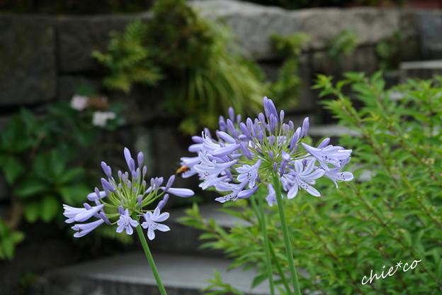 鎌倉-083