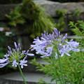 写真: 鎌倉-083