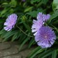 写真: 鎌倉-089