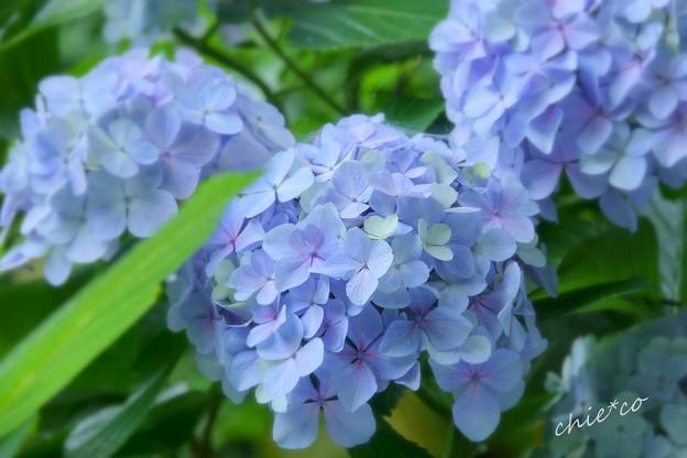 写真: 鎌倉-099