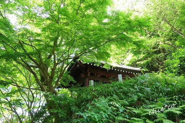 写真: 鎌倉-105