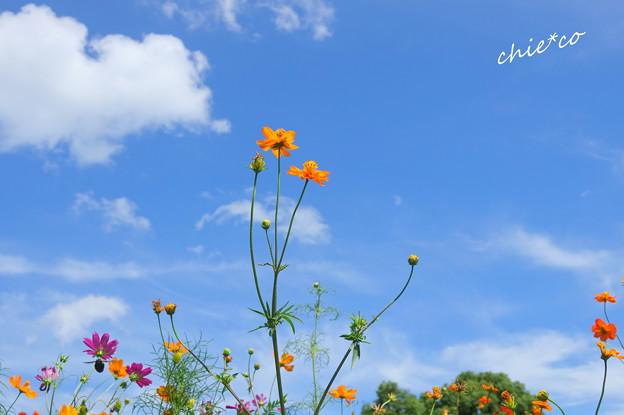 写真: 浜離宮恩賜庭園-170