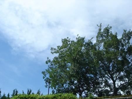 名残の夏を感じて見上げた空と・・・