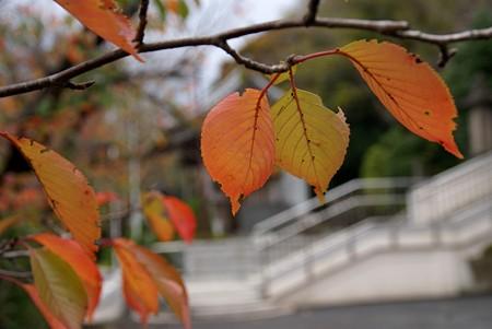 紅葉の季節~♪