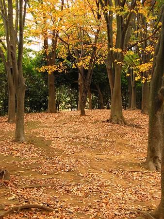 秋色木立・・・