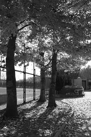 冬の公園で・・・