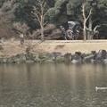 写真: 雨の奈良公園