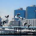 写真: 都会を飛ぶ