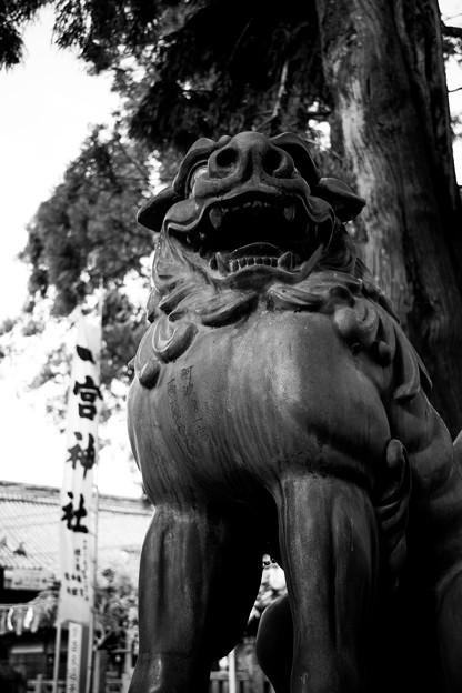 Photos: 一宮神社の胸筋がすごい狛犬さん