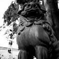 一宮神社の胸襟がすごい狛犬さん