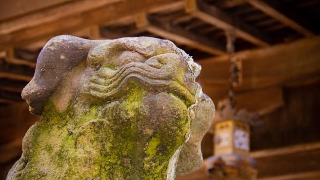 Photos: 一宮神社のむすっとした狛犬さん