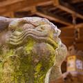 一宮神社のむすっとした狛犬さん