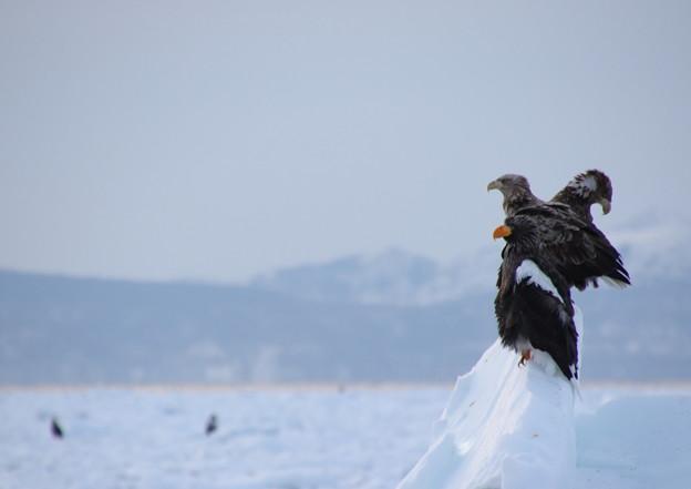 Photos: 根室海峡流氷クルーズ