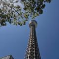 初夏のマリンタワー