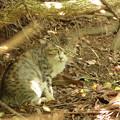 Photos: 猫、潜む