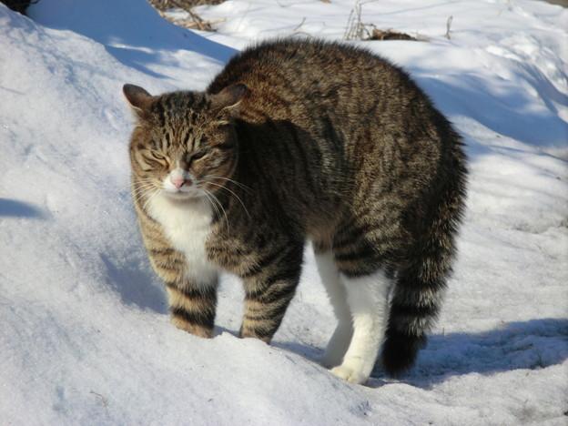 冬の散歩にて