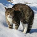 Photos: 冬の散歩にて