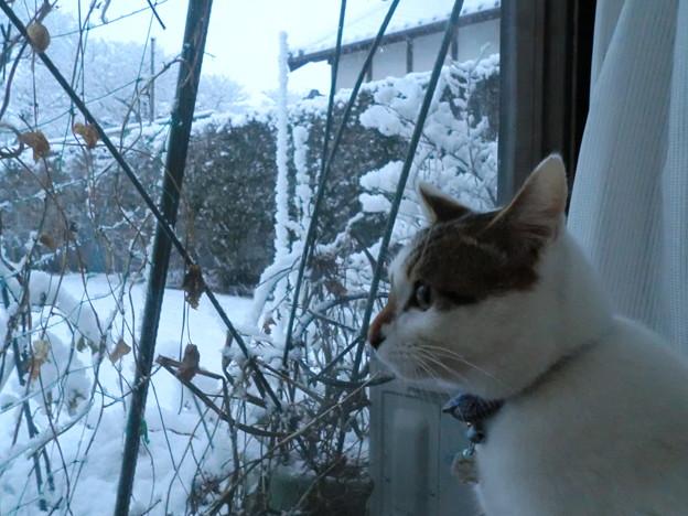 初めての冬1