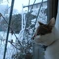 Photos: 初めての冬1