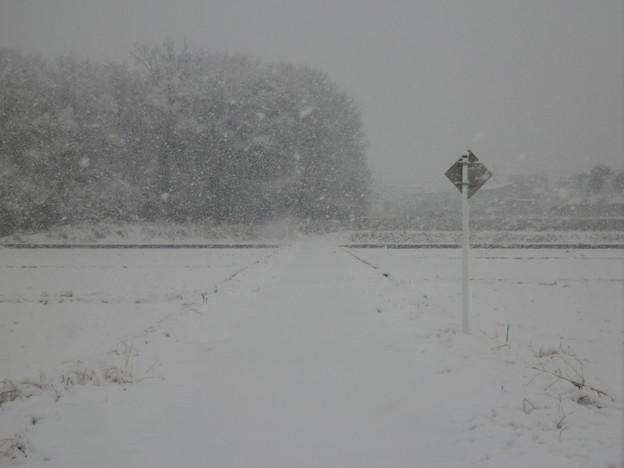 吹雪く散歩道