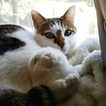 写真: 窓辺の添い寝