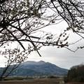 写真: 寒空の梅