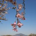 写真: 郷土の春