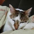 写真: ブサ寝顔