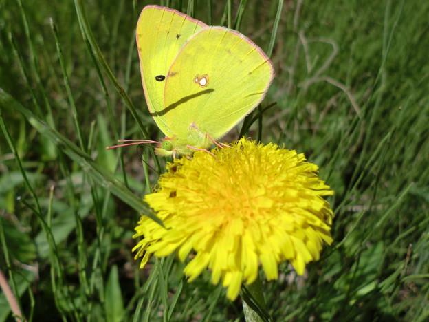 写真: Yellow×Yellow