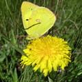 Photos: Yellow×Yellow