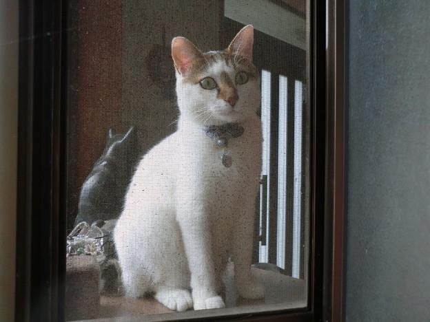 窓辺のハナ