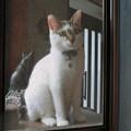 写真: 窓辺のハナ