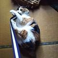 写真: 豪快じゃれ猫