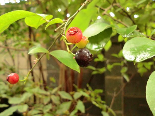 Photos: blueberry