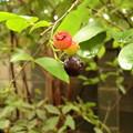 写真: blueberry