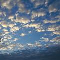 写真: 見上げる秋空